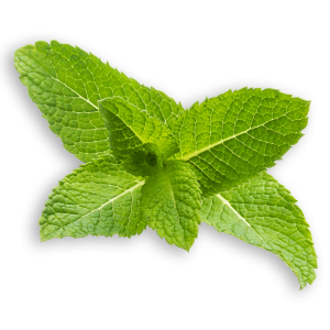 Mint Leave-5